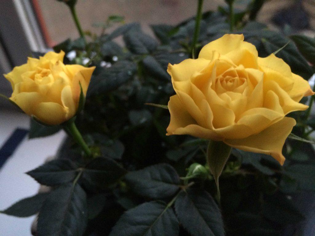 03.1.Yellow