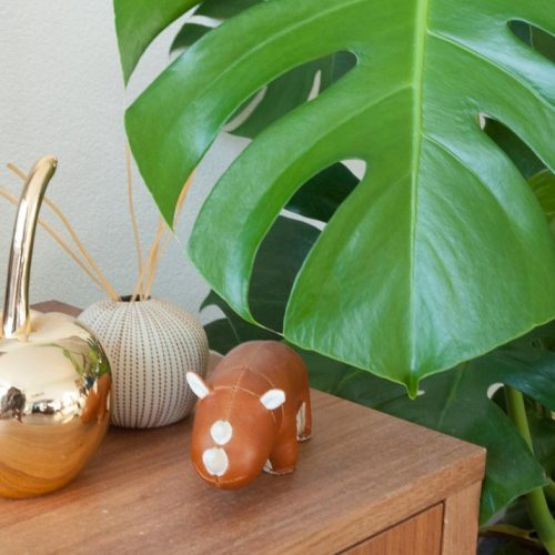 Pictures: a plant next to a few knick-knacks on a table.